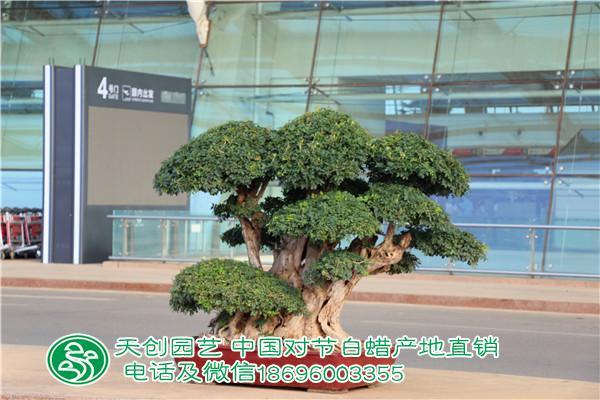 武汉国际机场出发站门口