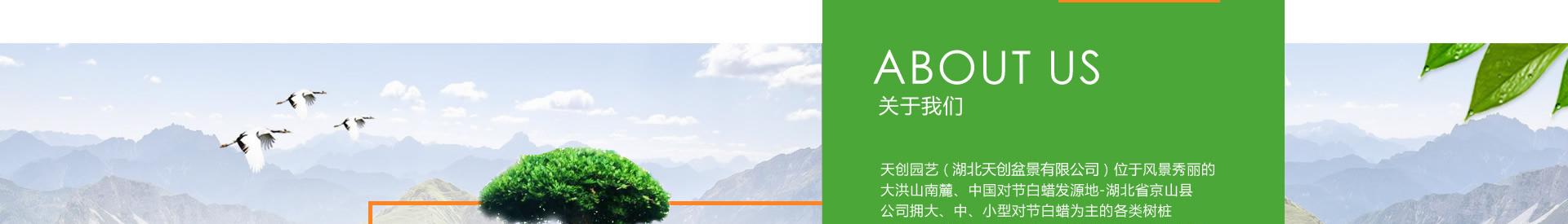 湖北天创盆景介绍